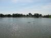 Lac (6)